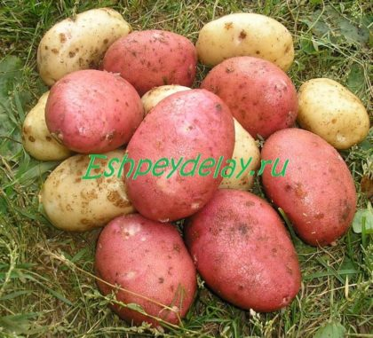 рецепт картошка на костре