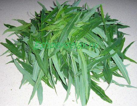 Листья иван - чая