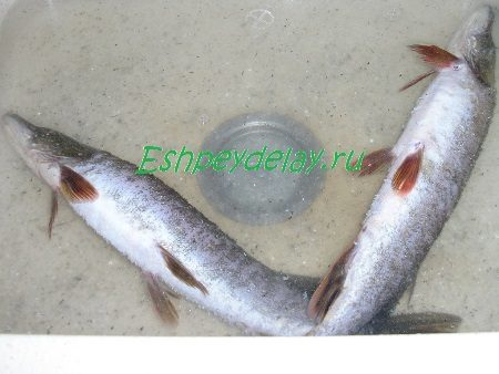 Рыба в раковине